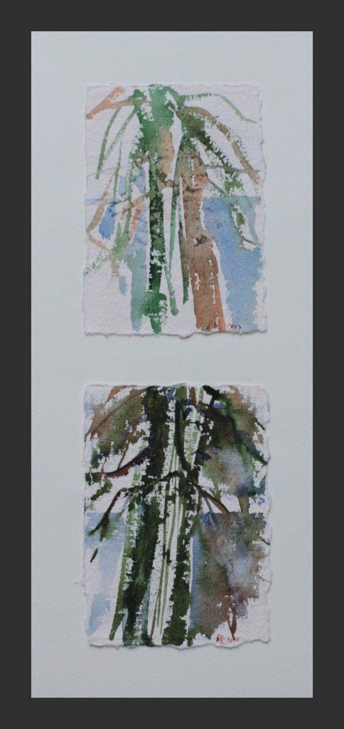 Mammutbaum, 2013, Aquarell, je 11x15 cm